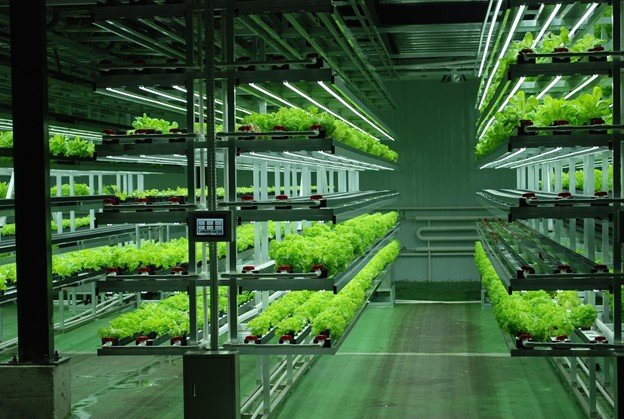 Vertical farms business