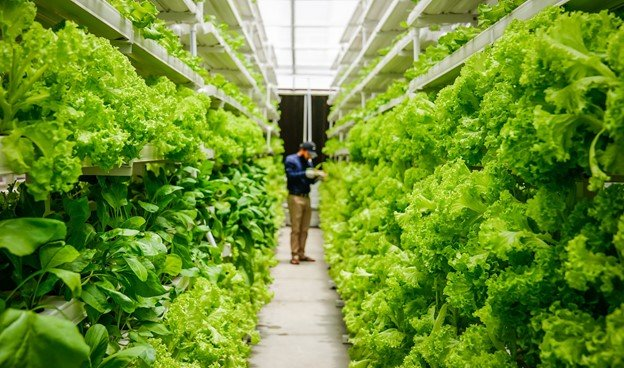 Vertical farming business that used a business plan
