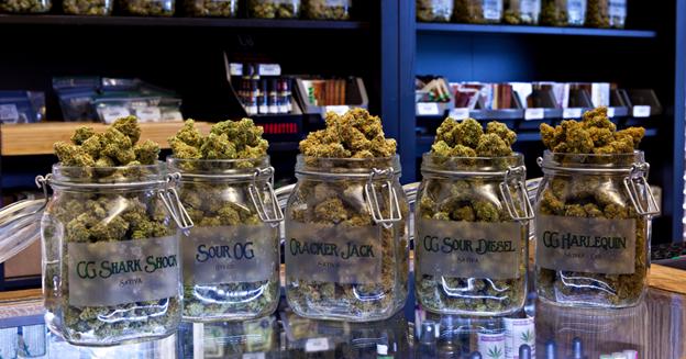 Jars full of cannabis in a cannabis store