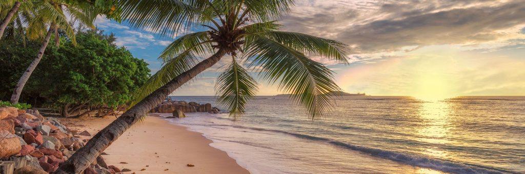 Read more on Caribbean Restaurant Business Plan Sample